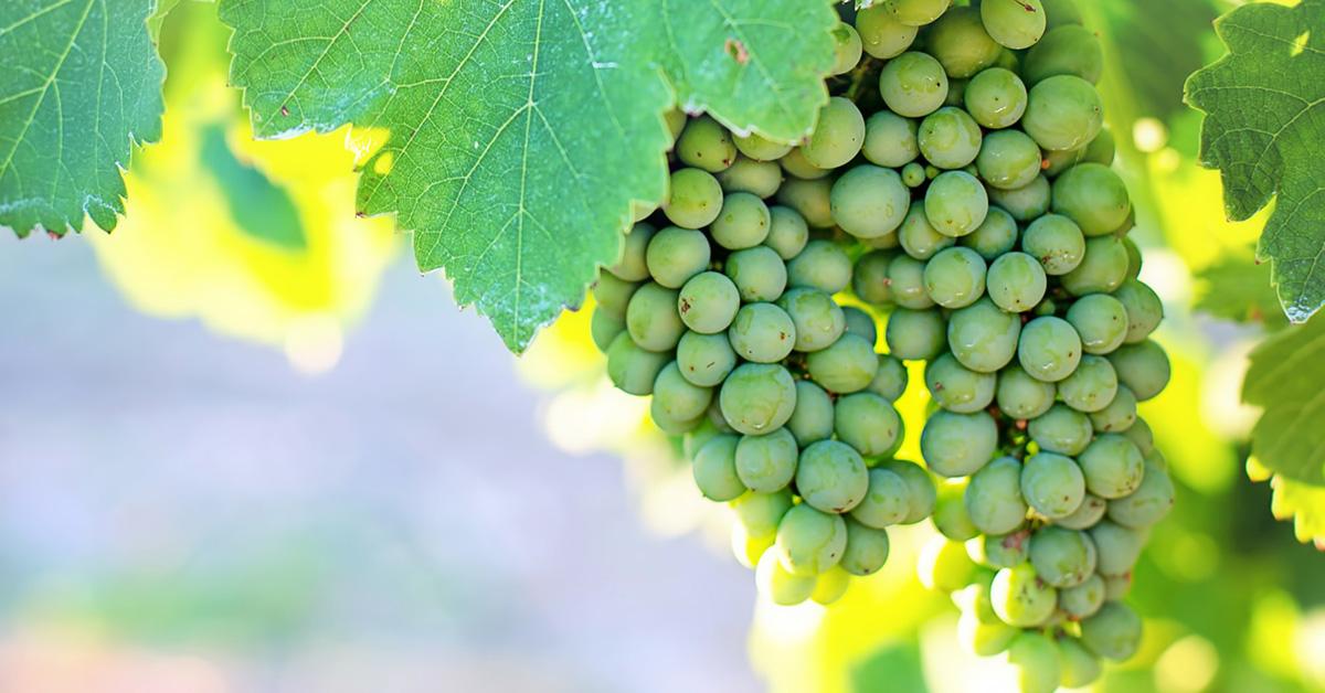 MISJA WINO: weekend wpolskich winnicach